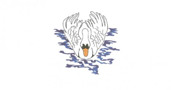 swans-side-image