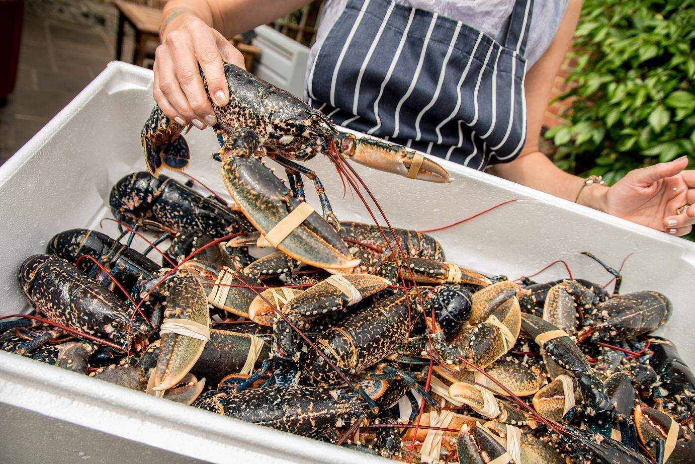 Lobster night - Every Friday