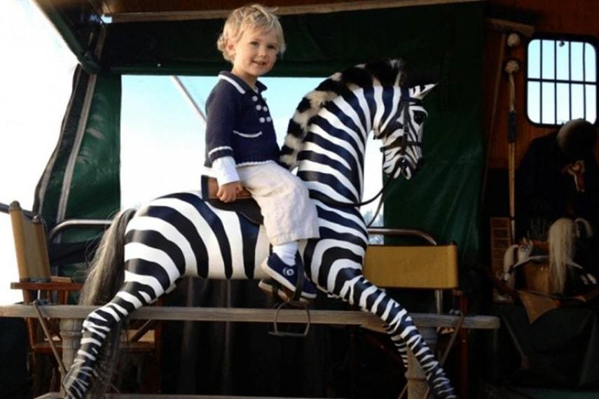 zebra-08-min
